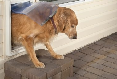 How To Train A Dog To Use A Dog Door