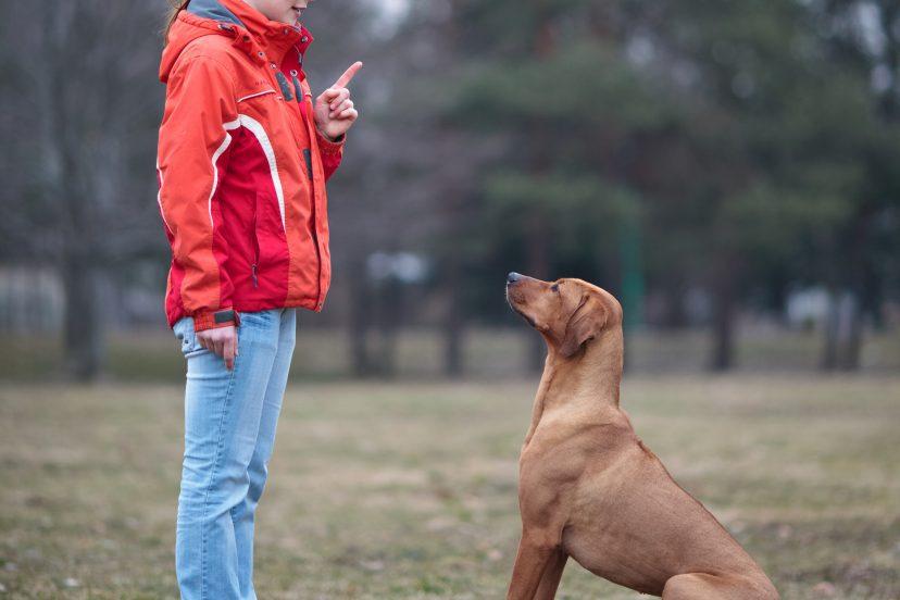 Types Of Dog Training Methods
