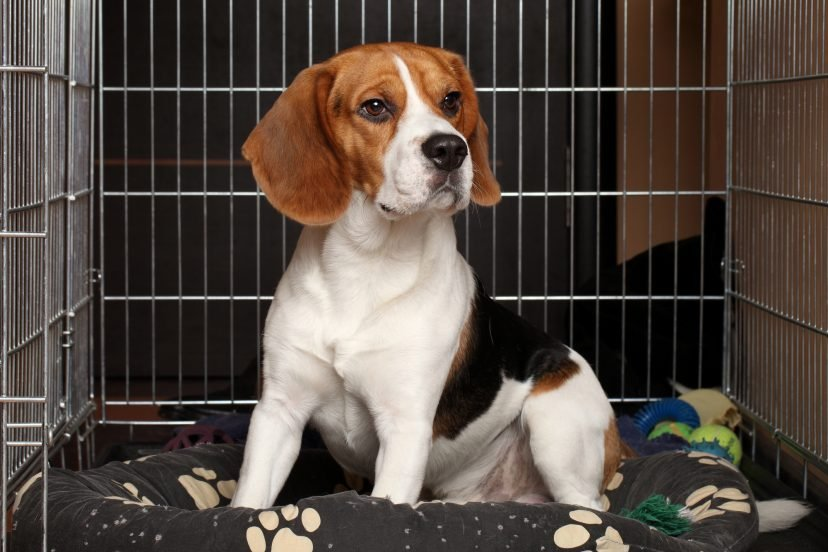 what to put in a puppy crate