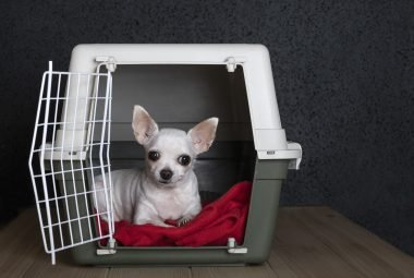 puppy whining in crate