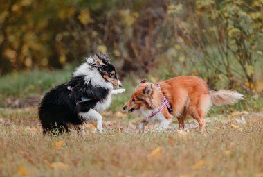 Do Dogs Need A Companion