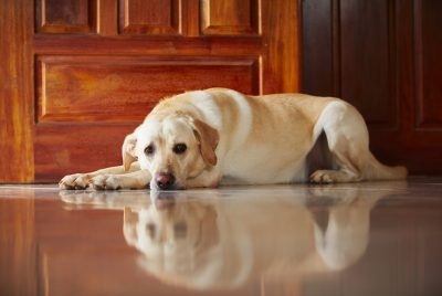 how to treat dog anxiety naturally