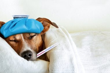 How To Know If Your Dog Is Sick