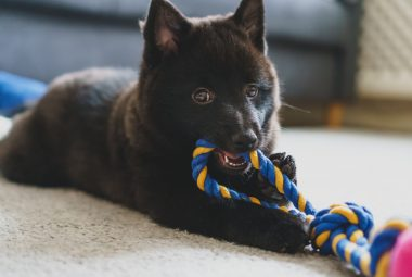 How To Soothe Puppy Teething