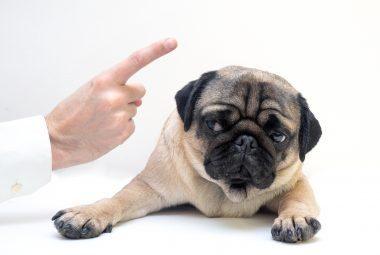 How To Correct A Dog's Bad Behavior