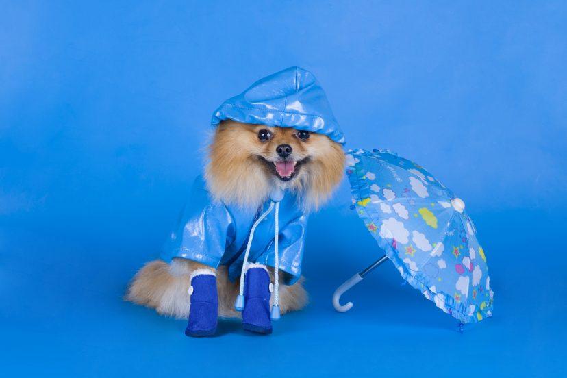 best summer dog boots