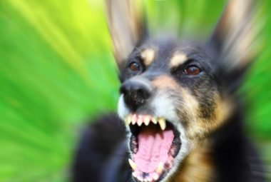 How To Calm An Aggressive Dog