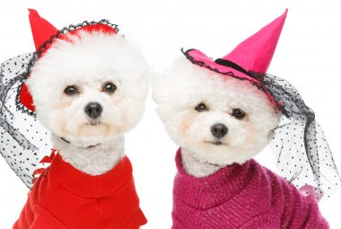 Halloween witch costumes for dogs