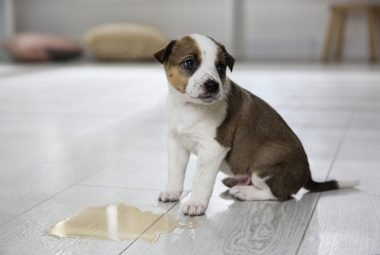 how long does it take for puppies to potty train