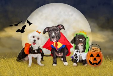 best Halloween costumes for dogs 2021