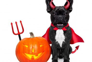 extra large breed dog halloween costumes
